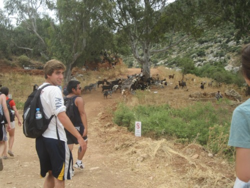 The group encounters obstacles (in the form of a goat impasse) while boogying down a Mycenean road.